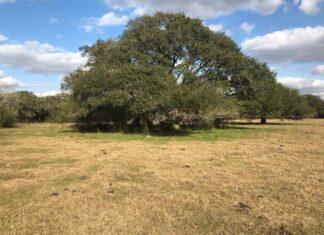 Columbus Texas Real Estate